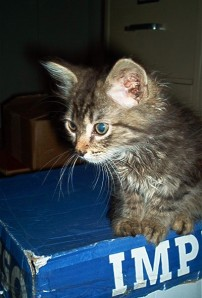 Kory Aversa Animal  Pets and Seniors Shelter Rescue Humane Society Adopt Cat