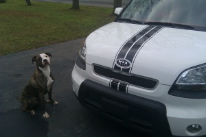 Kory Aversa Kia Soul Racing Stripes 4