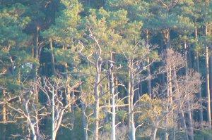 Kory Aversa Horses Assateague Chincoteague Bald Eagle