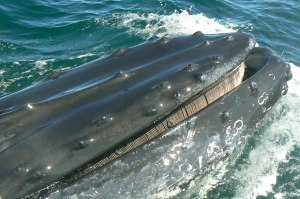 Kory Aversa GLBT Travel Provincetown Whale Watch 2
