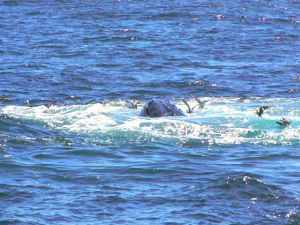 Kory Aversa GLBT Travel Provincetown Whale Watch
