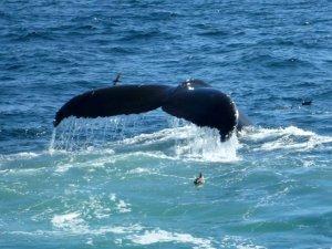 Kory Aversa GLBT Travel Provincetown Whale Watch 3