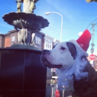 East Passyunk Decks the Ave with a Month of Festive Fun!