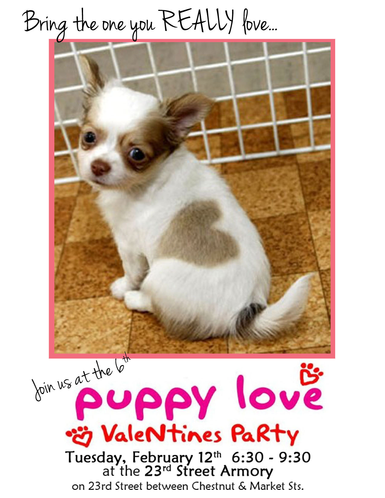 Celebrate Your Four Legged Friends At Puppy Love Valentines Party